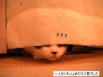 かくれんぼ3.JPG