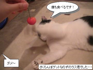さくらんぼ3.JPG
