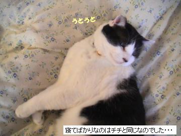 ふとん-4.JPG