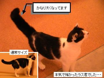 クロネコ3.JPG