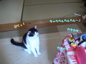タップダンス-2.JPG