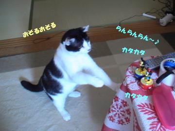 タップダンス-3.JPG