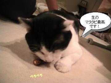 マタタビ4.JPG
