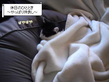 二人毛布-1.JPG