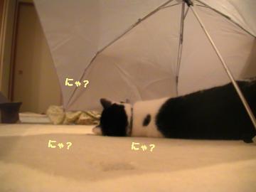 傘2.JPG