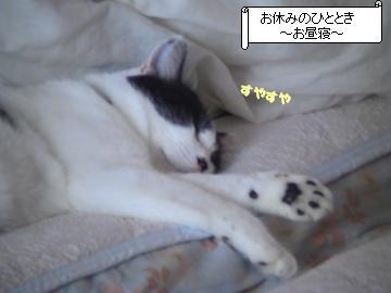 寝顔-1.JPG