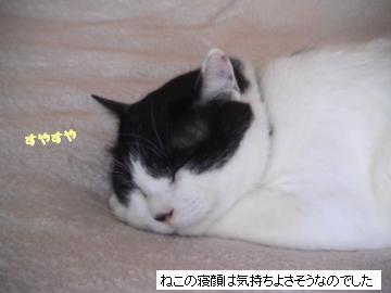 寝顔-2.JPG