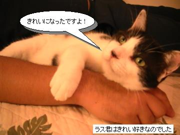 毛づくろい3.JPG
