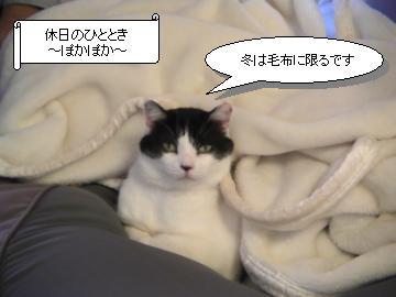 毛布-1.JPG