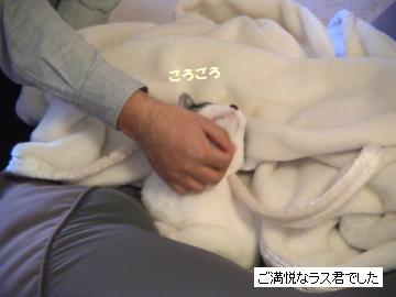 毛布-2.JPG